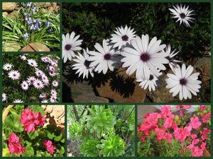Spring garden_1