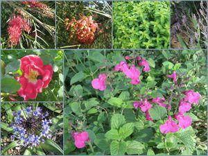 Oct garden_1