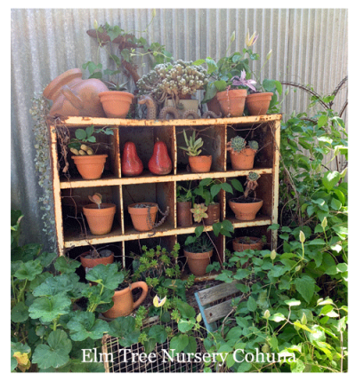 Elm-Tree-Nursery-Cohuna-2