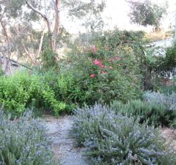 Garden1658_1_2